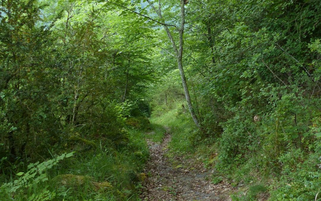 Création Sentier découverte & botanique