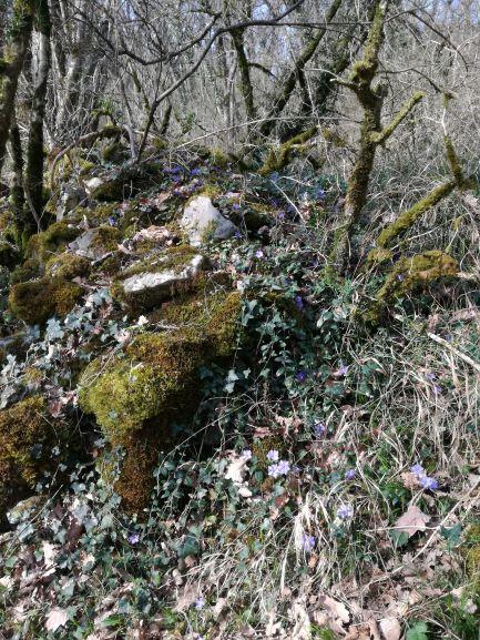 2020 : Ouverture d'un ancien chemin dans le cadre de la prospection archéologique
