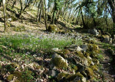 2021 – Botanique au château en Avril